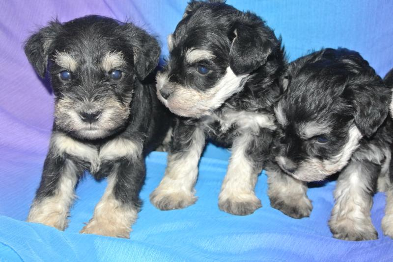 Available male on far left.