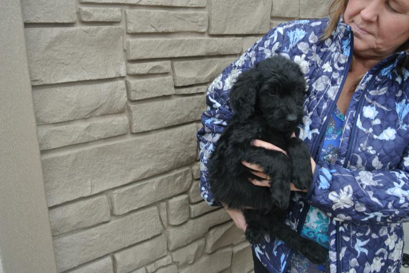 AVAILABLE SUPER SWEET GIANT SCHNOODLE BOY!