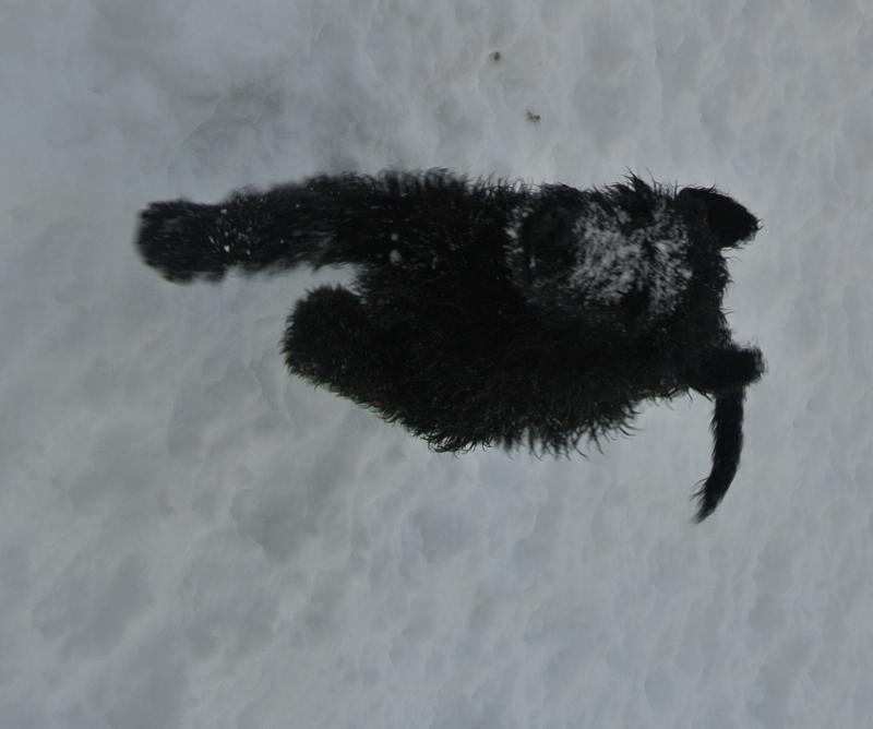 LATEST PICTURE OF OUR GROUP OF AVIALABLE BABIES PLAYING WITH US IN THE SNOW!