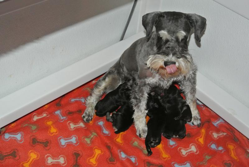 Momma with her new litter!!