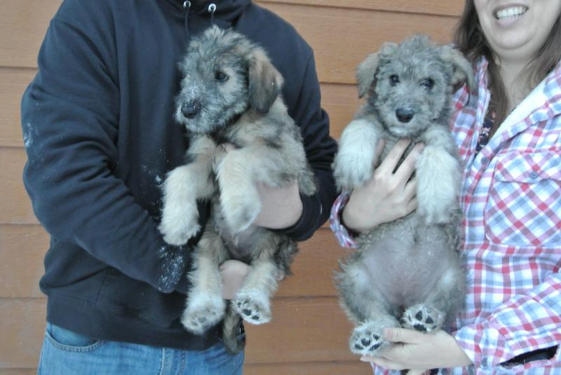 AVAILABLE GIANT SCHNOODLE GIRLS BELOW!