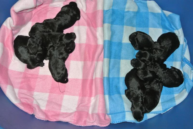 TIMBER & YOSHI'S NEW GIANT SCHNOODLE BABIES!