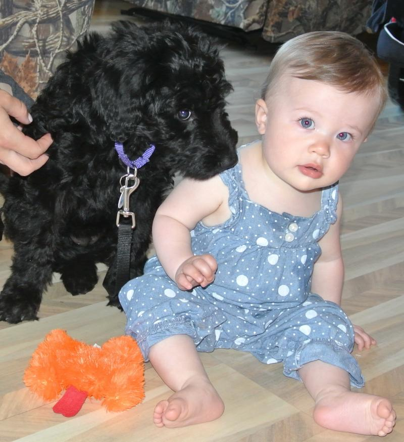 OUR GRANDDAUGHTER WITH CURRENT FEMALE PUPPY!