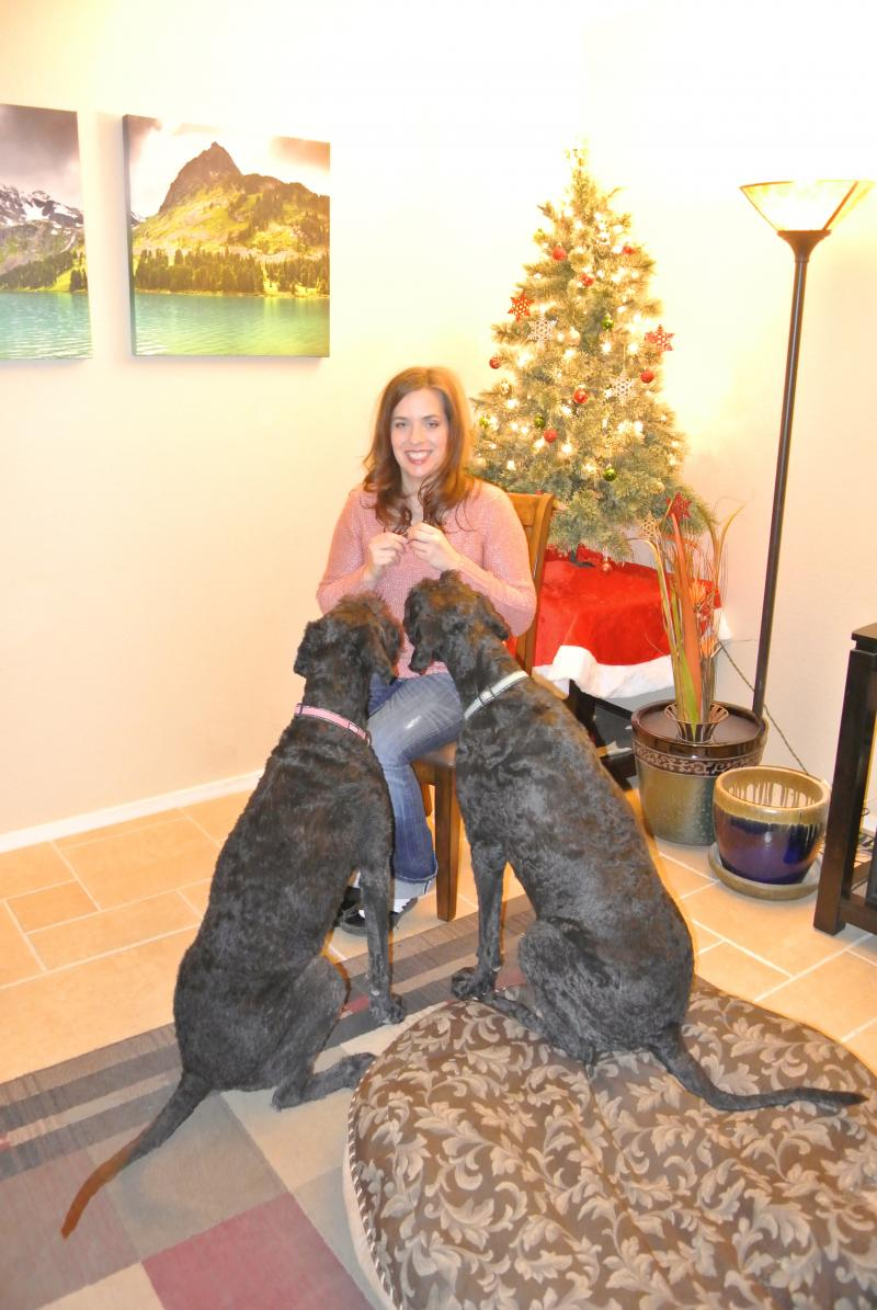 Zuess, our akc giant schnauzer pictured below on the same day! He is