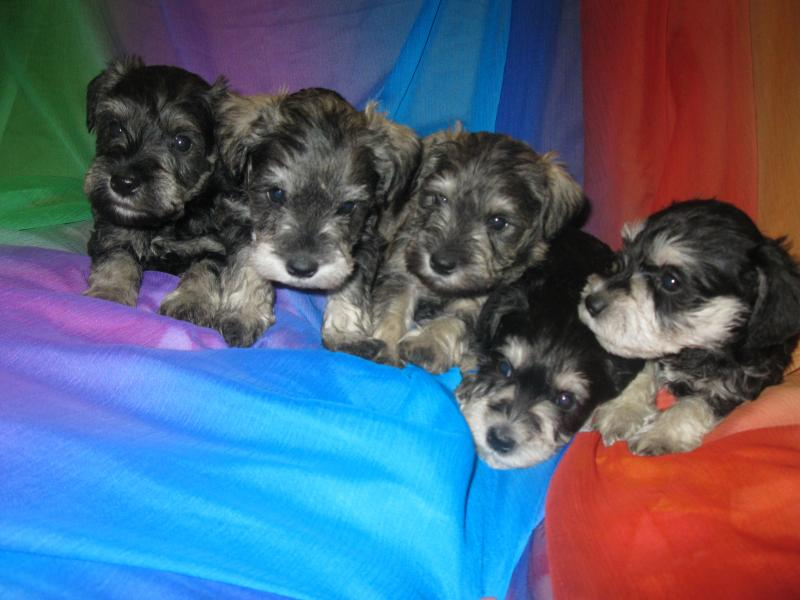 Charily''s litter