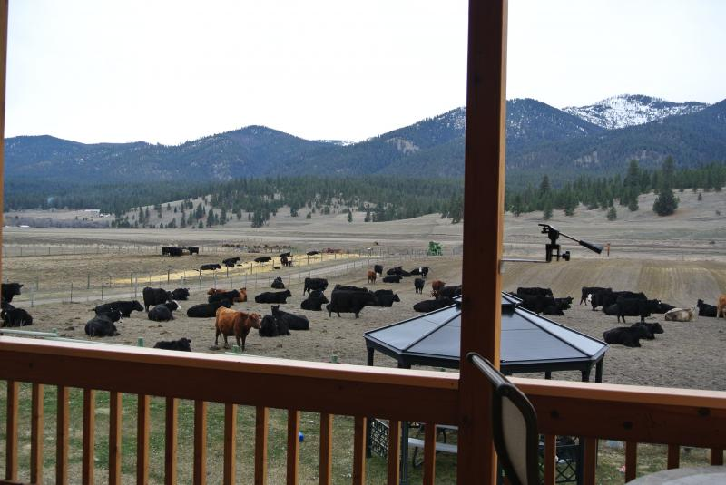 CALVING SEASON (FROM OUR DECK WATCH) MARCH 2013