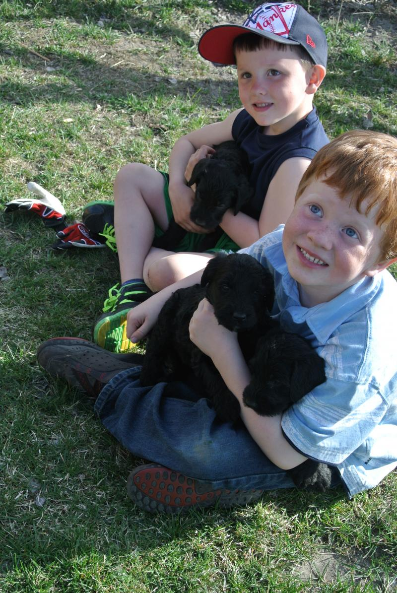 Kids and G. Schnoodle puppies at 4 weeks old