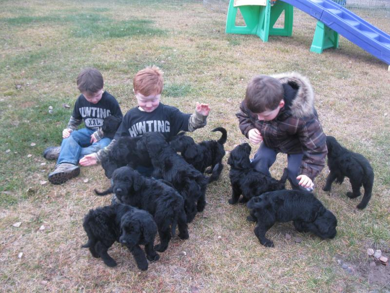 CURRENT LITTER PLAYING WITH OUR BOYS