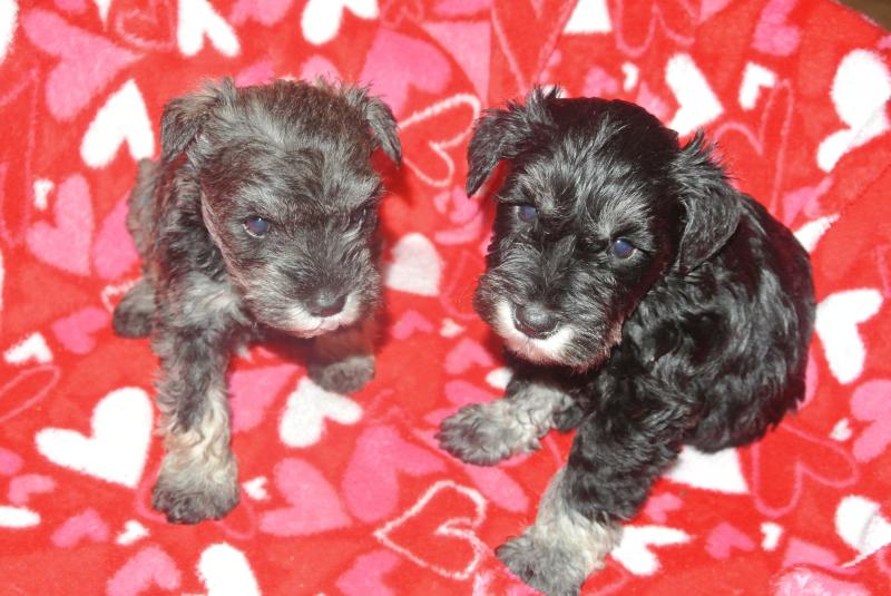 Available silver male on left.