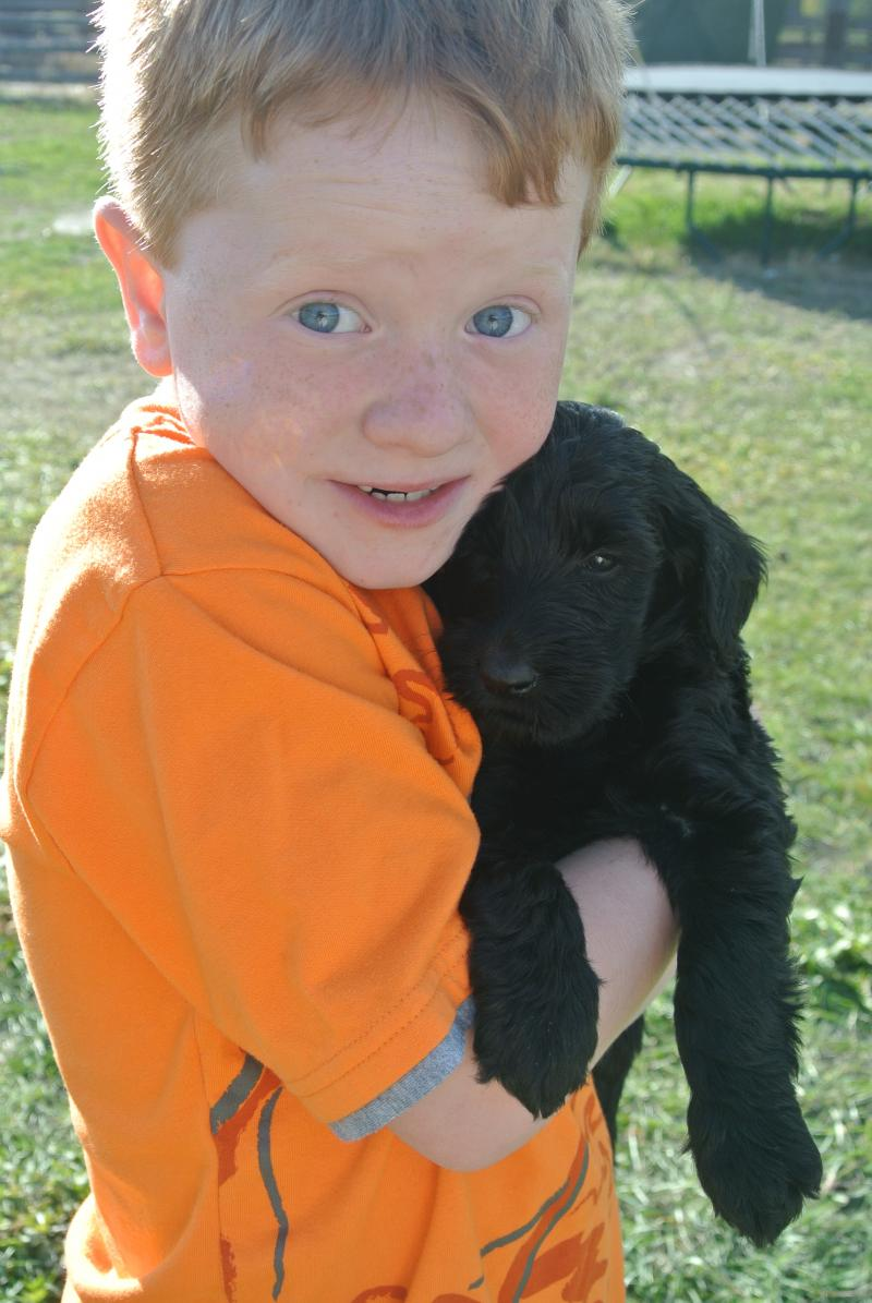 pICTURES BELOW WERE TAKEN AT 5 1/2 WEEKS OLD! kIDS AND PUPPIES PLAYED