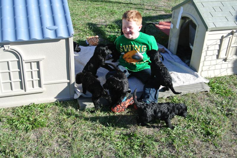 After 1st one are of my twins with the puppies they played together