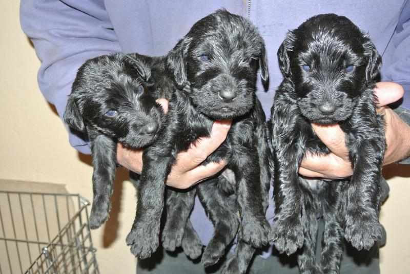 Three of the seven boys at 3 weeks old