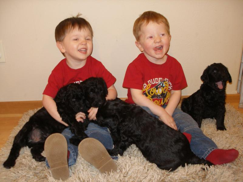 Our twin boys with Giant Schnoodle puppies