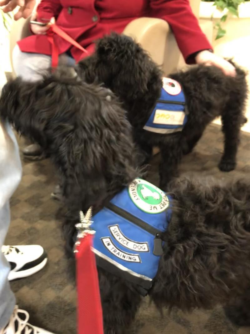 JUNE 2019 PUPPIES IN SERVICE DOG TRAINING